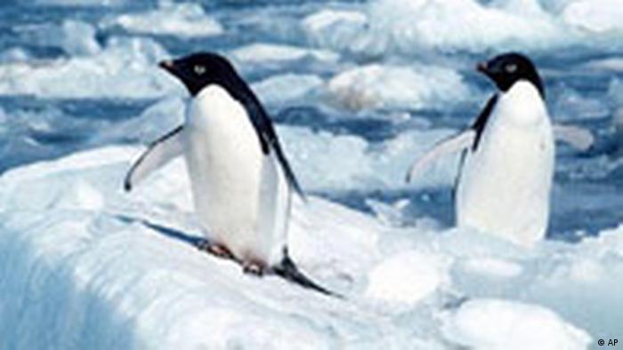 Penguins in the Antarctic. Photo credit: AP