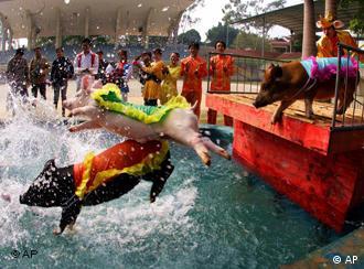 南宁动物园的飞猪入水表演