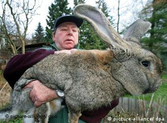 Karl Szmolinsky and one of his big bunnies -- that's a lot of rabbit stew