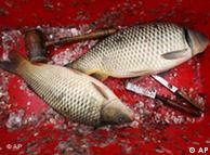 مچھلی خوش شکل ،خوش ذائقہ اور صحت کے لئے مفید
