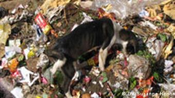 Hund im Müll, Nepal