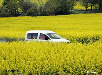A car drives along a rapeseed field