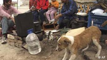 A Roma family and a dog sit on the ground while cooking