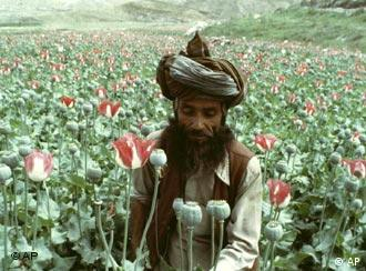 EU money is also meant to help farmers stop growing poppies, which are used to make opium