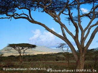 Landschaft Afrika Savanne mit Schirmakazie (Foto: picture alliance)