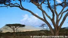 Landschaft Afrika Savanne mit Schirmakazie landscape Ostafrika Savanne/Ostafrika