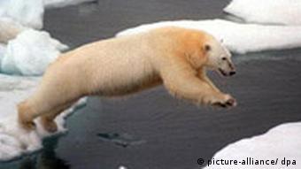 Klimawandel Arktis-Eis schwindet dramatisch