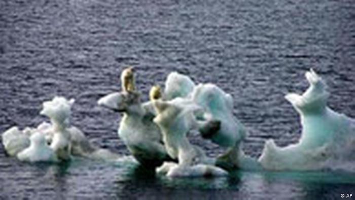 Klimawandel Eisbär auf Eischolle (AP)