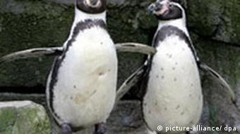 Penguins at a zoo in Bremerhaven