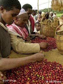 Äthiopien Kaffee Farmer sortieren Kaffee Bohnen
