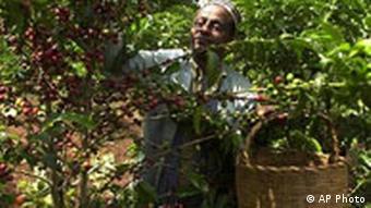 Kaffee Bauer in Äthiopien