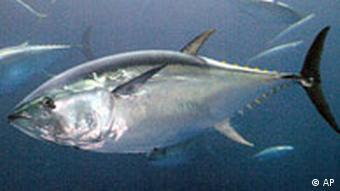 Tunfisch