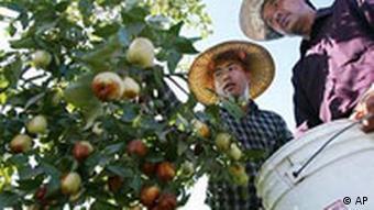 Two men stand next to an apple tree (Foto: AP Photo/Gary Kazanjian)
