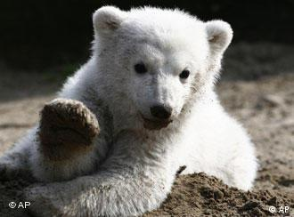 Knut's book will look at his natural habitat -- under threat from global warming