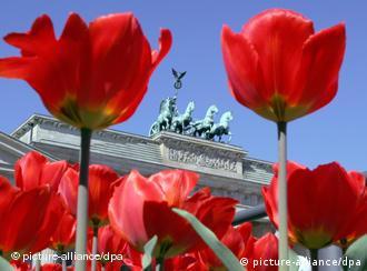 Tulpen am Brandenburger Tor. Quelle: dpa