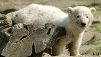 wild animals should not be kept in zoos
