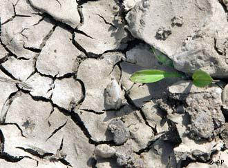 A single plant growing out of dry, cracked earth