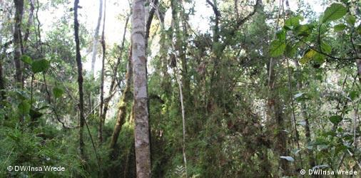 Regenwald in Madagaskar