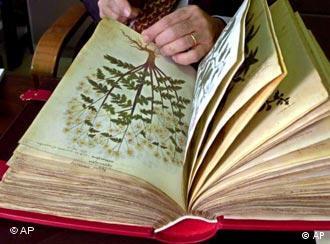 jemand blättert in einer alten Handschrift mit botanischen Zeichnungen