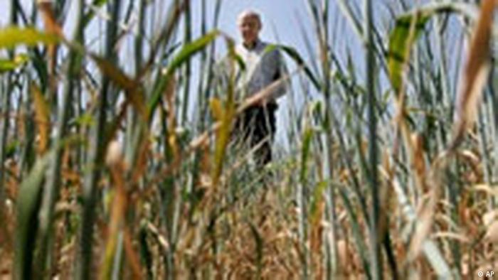 Deutschland Wetter Klima Trockenheit Dürre Ernte Ausfälle