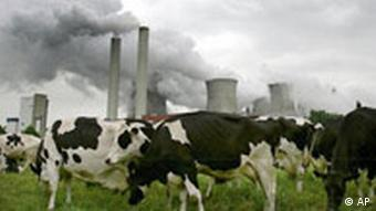 Cows graze in front of a coal plant