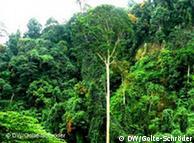 Selva tropical en Sumatra.