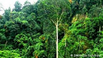 Experts predict the Indonesian rainforest will shrink by 15 percent over the next 10 years