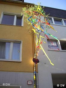 Maibaum an einer Hauswand in Köln-Süd