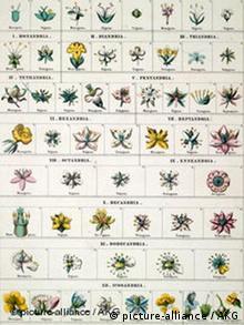Carl von Linne Pflanzensystem