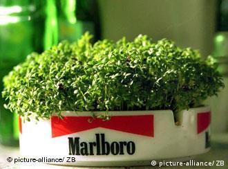 Пепельница как горшок для комнатных растений