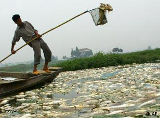 A fisherman takes out dead fish from the water at a fishery in Wuhan, in China's central Hubei Province, Monday, June 4, 2007. The problem was said to have been started by a sewage leak at a nearby industrial factory. Decades of breakneck industrialization and lax enforcement of environmental regulations in China have left the country with increasingly polluted bodies of water. (AP Photo/EyePress) ** CHINA OUT **