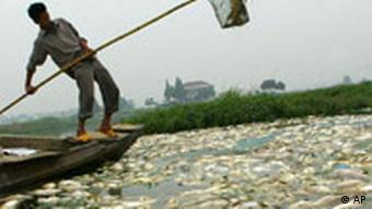 Water pollution in China has been detrimental for the fishing industry