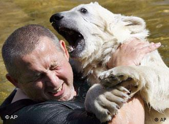 Knut, who did not attack the woman, play fights with a zoo keeper at Berlin Zoo