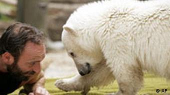 BdT Deutschland Berlin Zoo Polarbär Knut