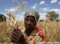 Mujer en Simbabwe, en medio de un cultivo de maíz: las mujeres, la clave contra el hambre.