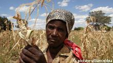 Miriam Mushindibaba zeigt einen trockenen Maiskolben im Dorf Chemhere in Simbabwe (Archivfoto vom 23.03.2002). Viele Bauern in den armen Ländern Afrikas und Asiens sind Analphabeten, sie haben weder Zugang zu Wasser noch Saatgut. Daher mutet es vielen Experten geradezu abenteuerlich an, dass sie gentechnisch veränderte Pflanzen anbauen. Doch die Vereinten Nationen preisen in ihrem neuesten Bericht gerade diese Pflanzen als einen Ausweg aus der Krise an. Foto: Alexander Joe dpa (zu dpa Korr: Wieder ein neuer Expertenrat - Mit Gen-Technik gegen den Hunger? vom 17.05.2004)