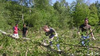 Une fois l'arbre abattu, il s'agit de le transporter...