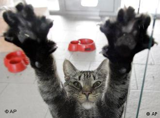 A cat puts its paws up on a sheet of glass.