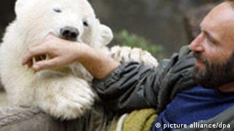 Polar bear Knut as a youngster with his keeper Thomas Doerflein