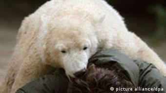 Knut lies on top of his keeper Thomas Doerflein
