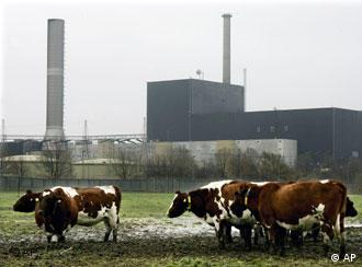 Brunsbuettel nuclear power plant with cows grazing in front of it