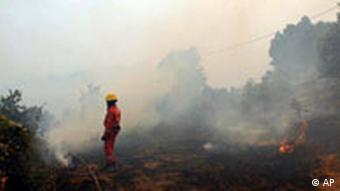 A Red Cross worker stands in a burnt area of forest