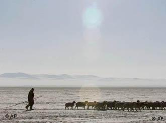 It's tough for animals and herders when temperatures go down to -50 degrees