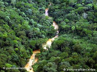 Aerial view of a rain forest in Congo