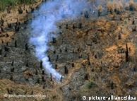 براعظم افریقہ میں ایک جنگل، جسے آگ لگا دی گئی، ایک درخت سے ابھی تک دھواں اٹھتا دکھائی دے رہا ہے