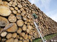قطع درختان جنگل
