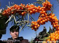 پھلوں کے رس یا گُودے سے بنائے گئے جوسوں کو استثناء حاصل ہوگی