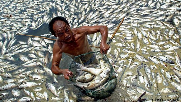 A man collects dead fish in Guanqiao Lake in Wuhan in central China's Hubei province, 11 July 2007. Some 5.000 kilogrammes fish died due to the polluted lake water and the sizzling weather in the city. EPA/Zhou Chao +++(c) dpa - Report+++