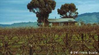 Weinbau in Barossa Valley (Quelle: Irene Quaile)