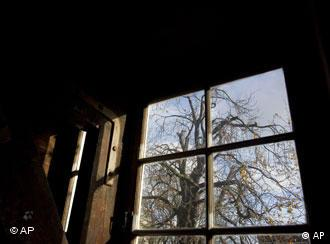 Вид на каштан через вікна музею Анни Франк. Архівне фото.
